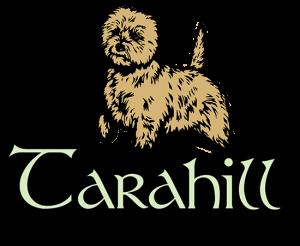 Cairn Terrier Breeder